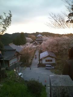 桜の奈良・吉野